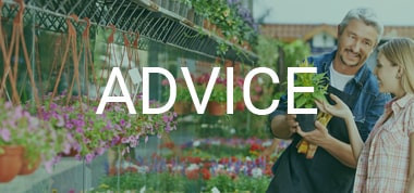 Colleague offering advice about gardening