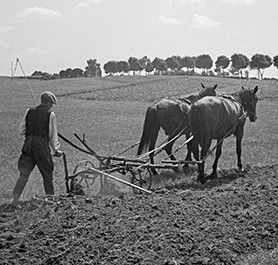 Farmer with horses and plough